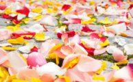 A covering of rose petals